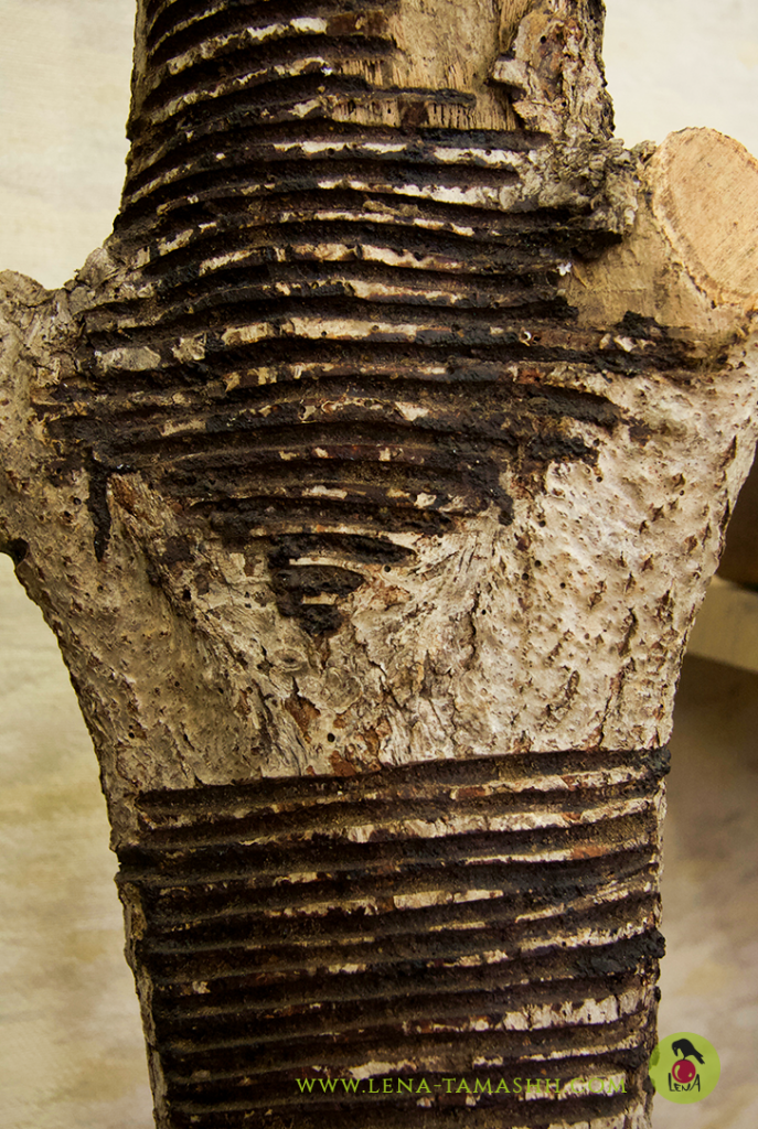 Urushi no ki lacquer tree